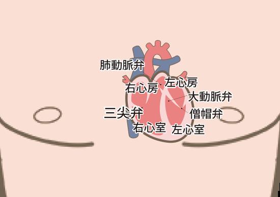 心エコー検査