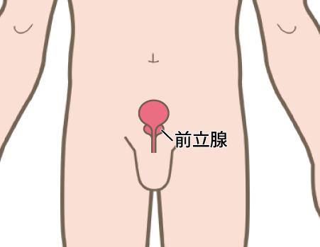 前立腺の位置